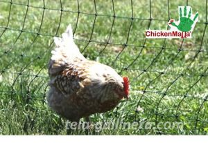 tela gallinera
