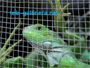 La tela gallinera también es usada para fabricar jaulas para reptiles pequeños, como iguanas o tortugas