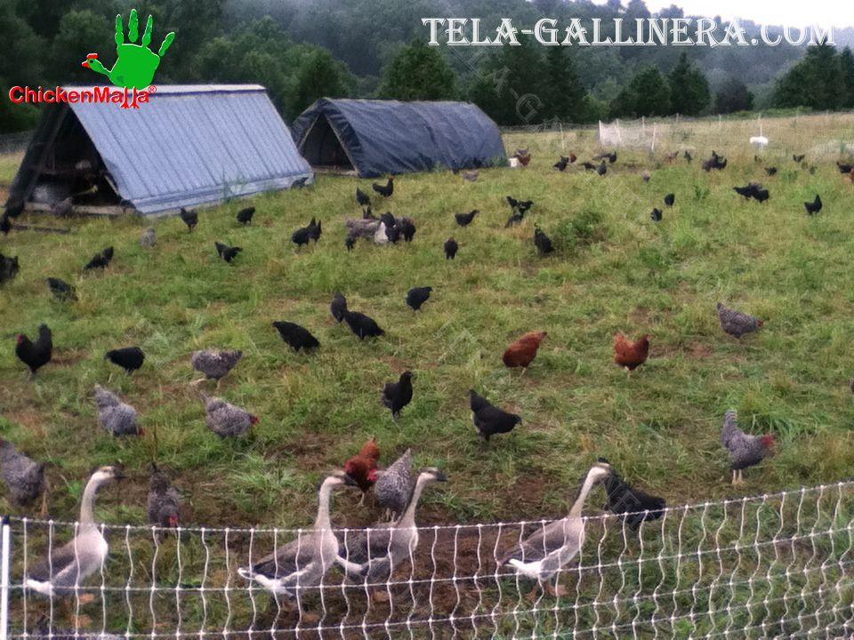 crianza de aves al aire libre