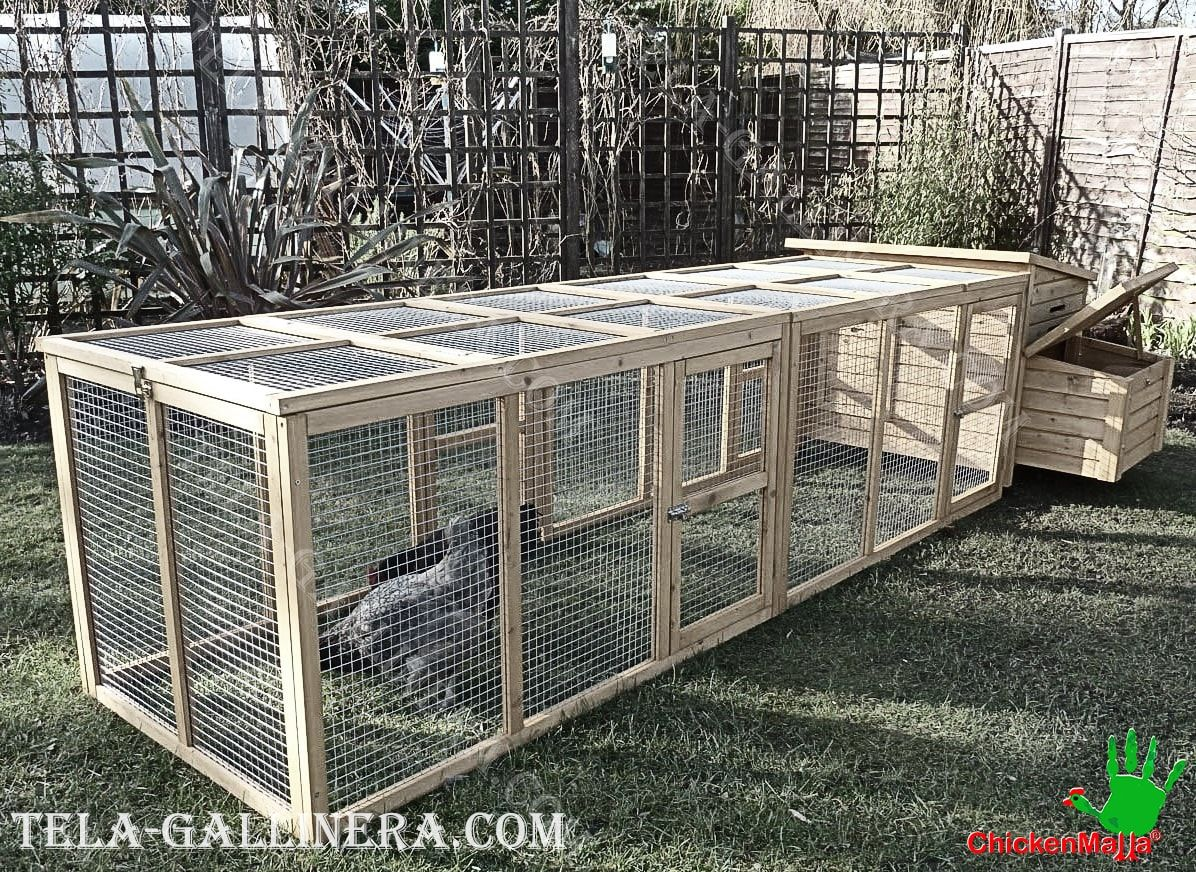 protege a las aves con CHICKENMALLA